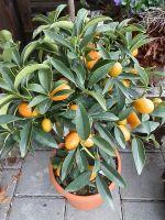 102-Citrus
