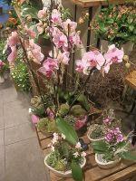 123-Orchideenschalen